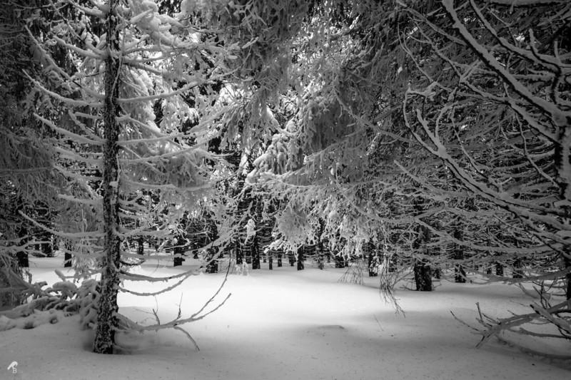 Frozen Winter Wonderland in Oberhof, Germany