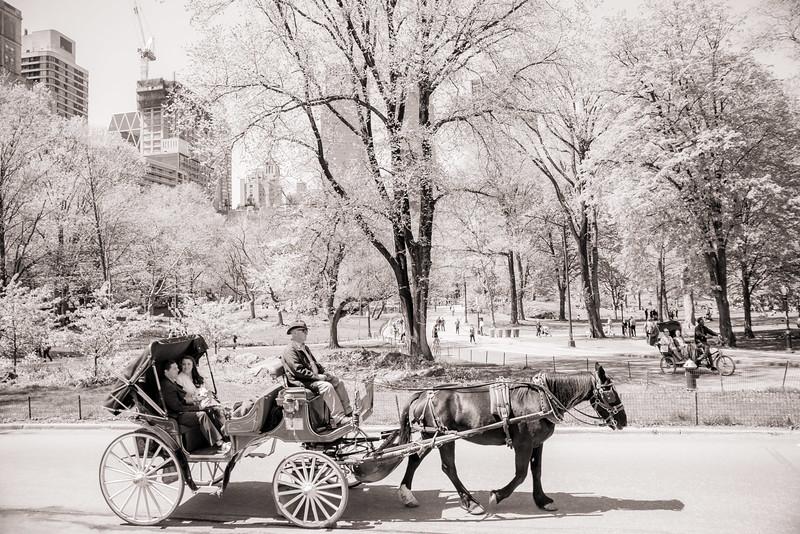 Lynn & David - Central Park Elopement Preview-3.jpg