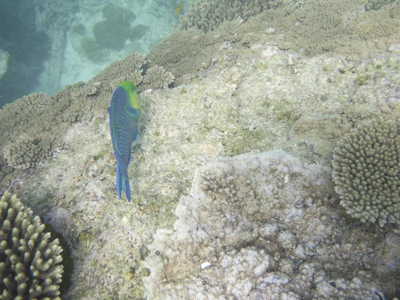 09. Lady Elliott Island-1418.jpg