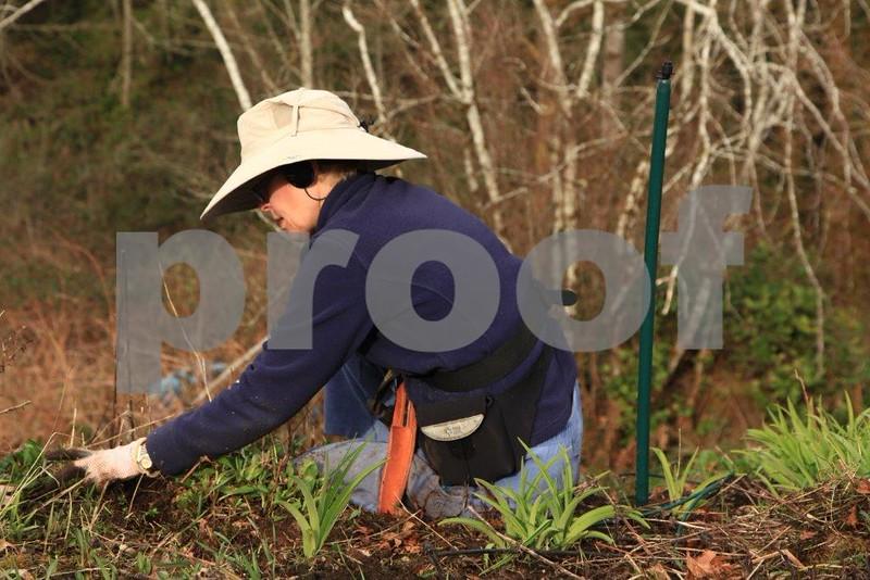 Susan garden 2895.jpg