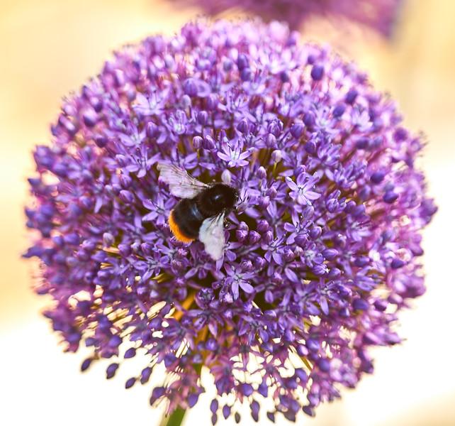 Flowers-5519.jpg