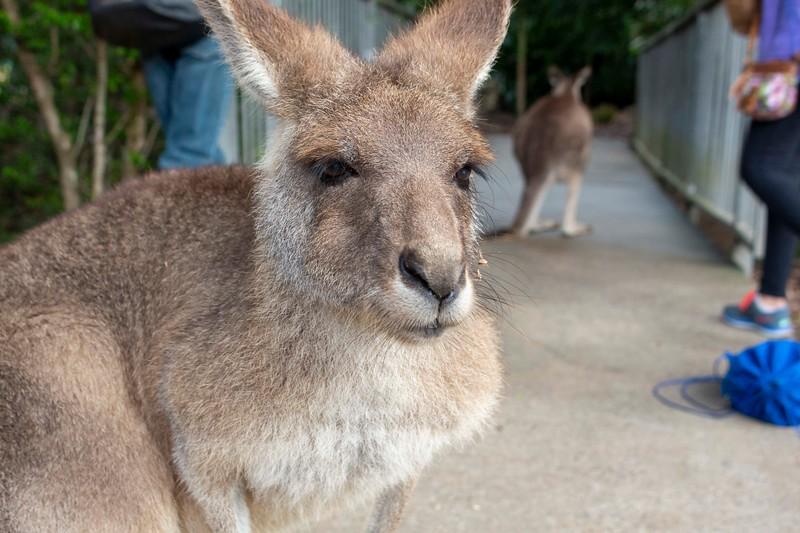 Australia_190.jpg