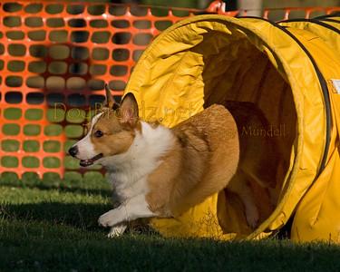 Hot Dog Agility Training - August 26, 2009
