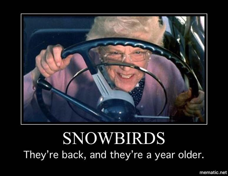 Snowbirds2.jpg
