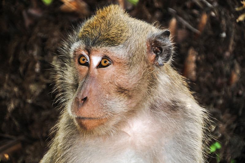 Bali Monkeys-10.jpg