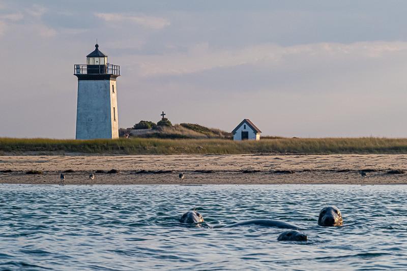 seals off Long Point.jpg