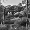 Reynolda Gardens - Summer #2