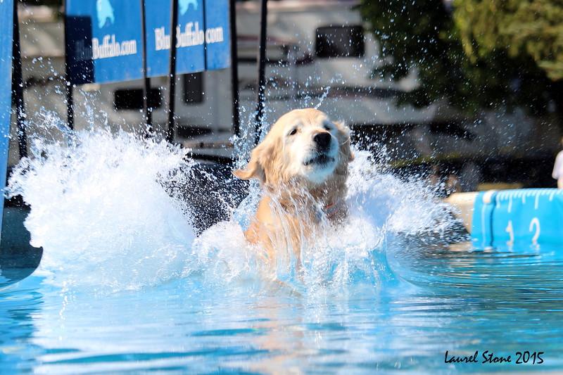 2015.8.5 Winnebago County Fair Dock Dogs (25).JPG