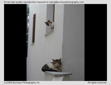 Pets - Kitties