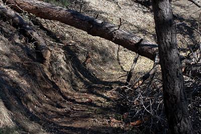 Trail issues 2013 Jan 17