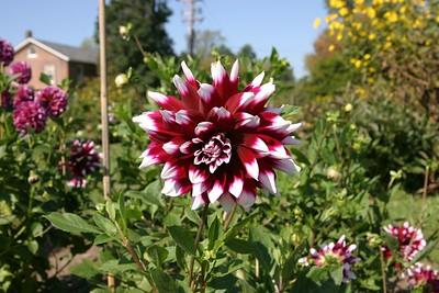 20041001 Gardener's Gardens