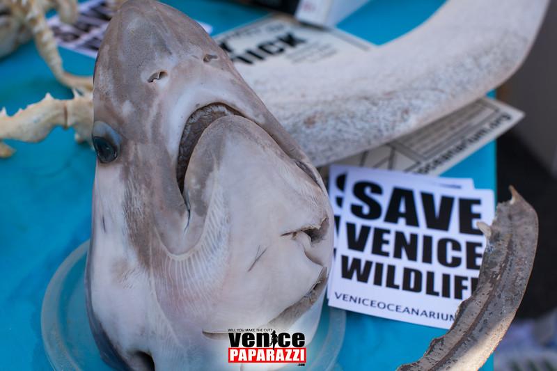 VenicePaparazzi-3.jpg