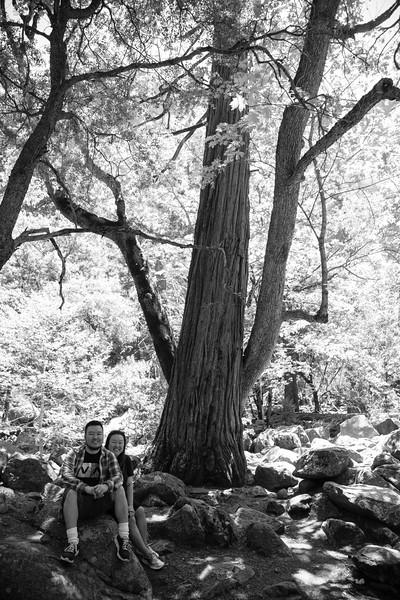 Yosemite_2016_Park-41.jpg