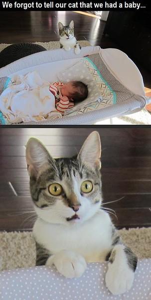 cat baby.jpg