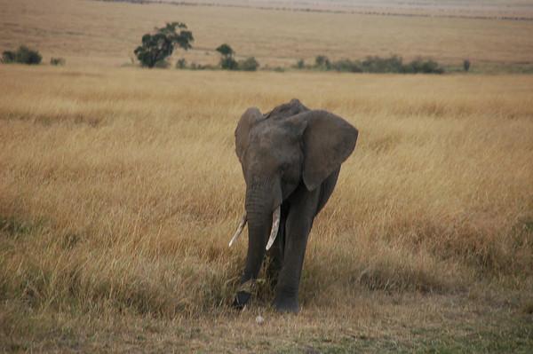 African Safari Highlights, August 2012