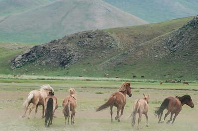 4th ger camp, Steppe Nomads