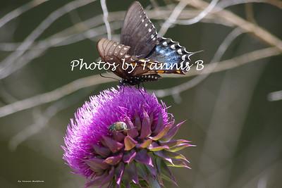 2013-Butterflies and moths