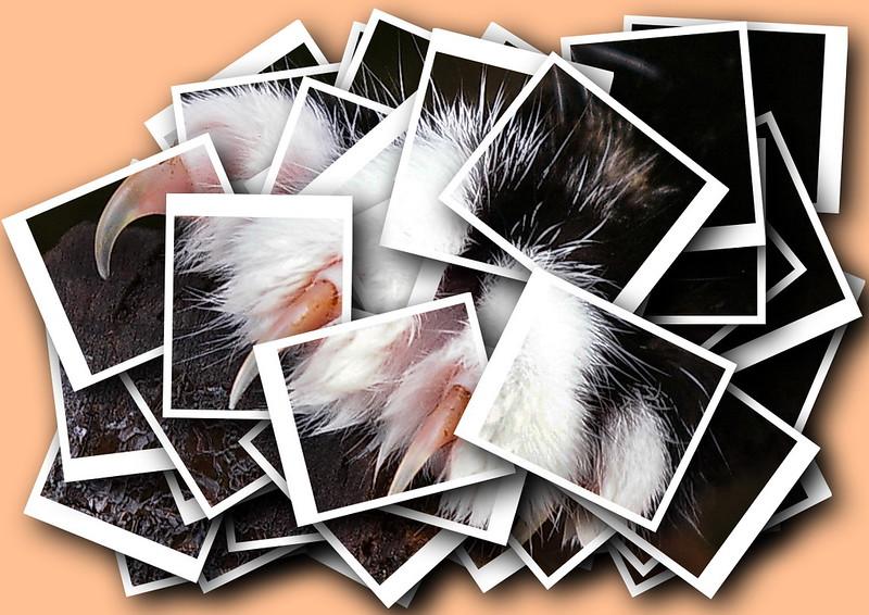 Rosemary - Cats's Paw.jpg