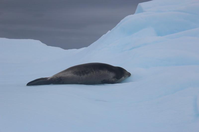 Antarctica 283.JPG
