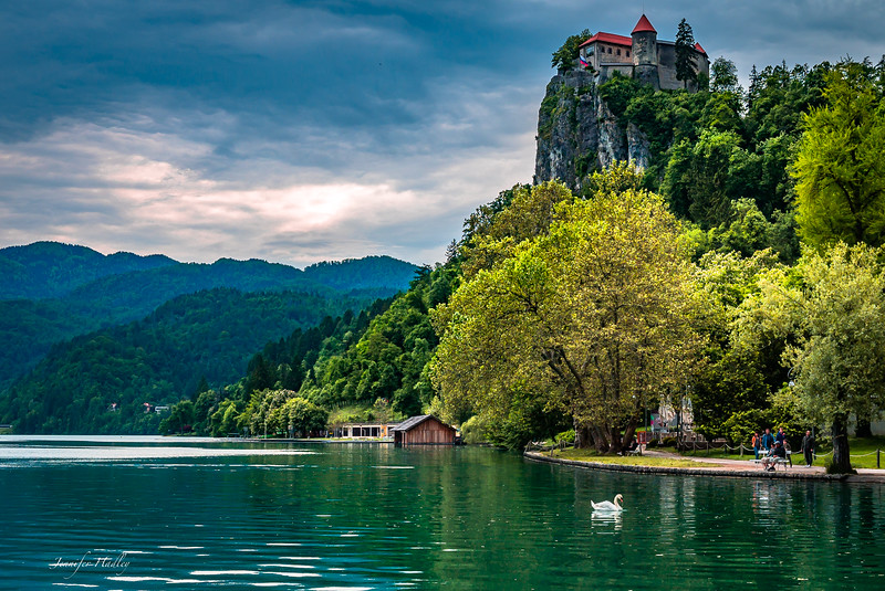 bled castle with swan 2.jpg