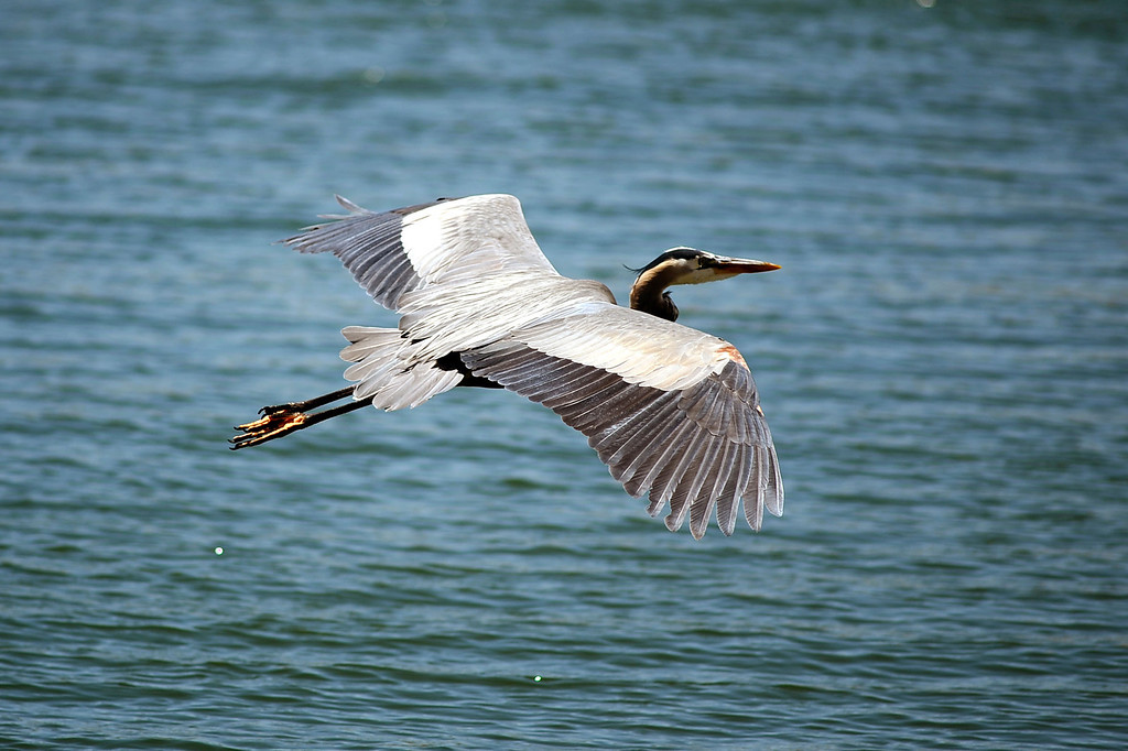 . Castaic Lake visitors were greeted with warm temperatures Tuesday May 13, 2014.  Warm weather is forecast for the region for the next few days.(Andy Holzman/Los Angeles Daily News)