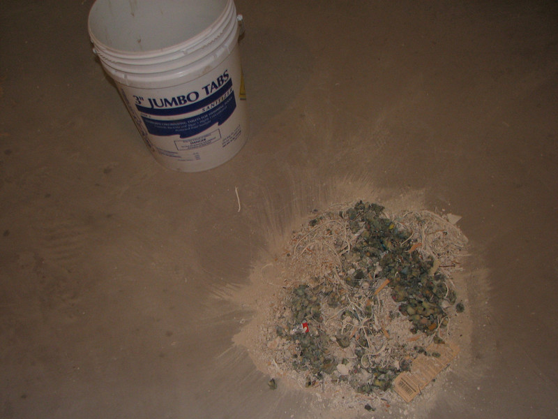 Pile of staples, dust, and other junk that was under the carpet