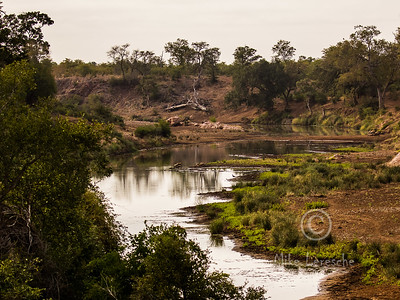 Kruger Scenic