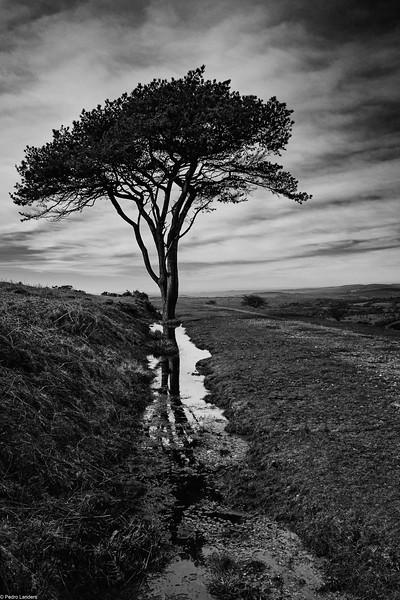 Morag's Tree