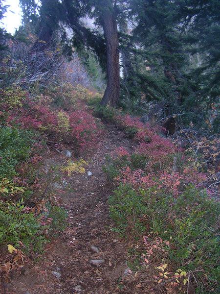 Pretty trail.