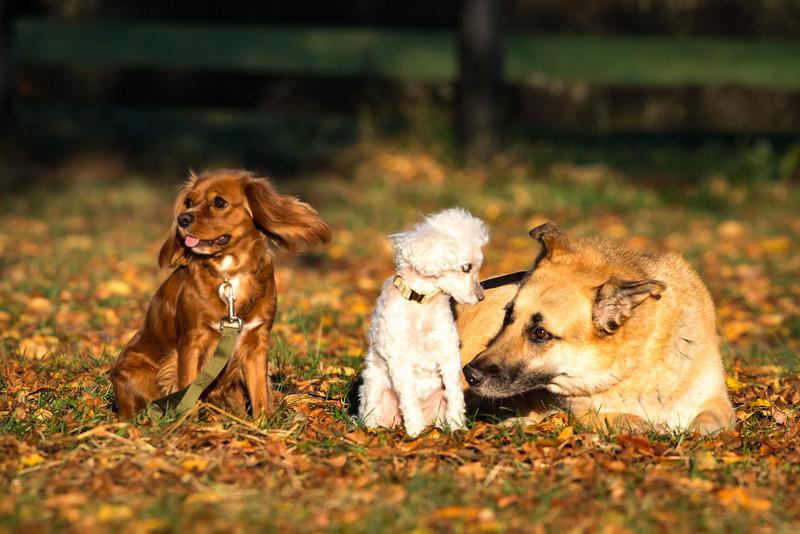 16_1024_buntingdogs-34.jpg