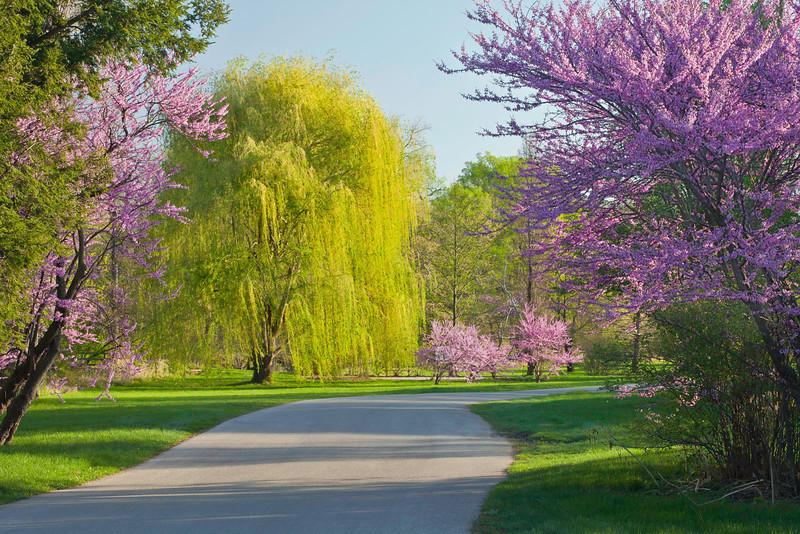 Spring12-1481 corrshrp.jpg
