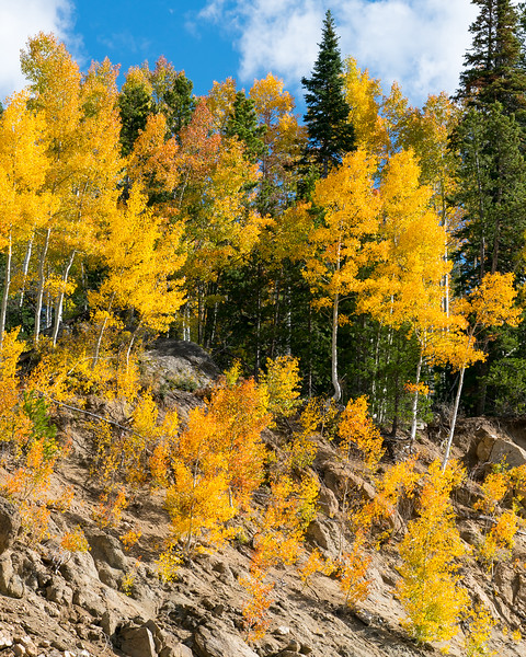 Steamboat Springs Fall Color Fade-1.jpg