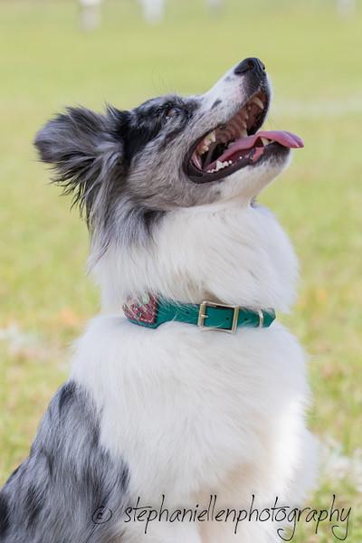 _MG_2782Up_dog_International_2016_StephaniellenPhotography.jpg