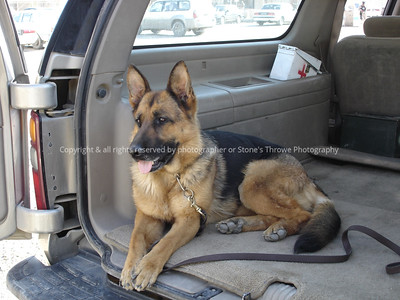 031-bomb_dog-sefe_iraq-30mar06-0004