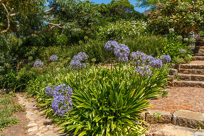 Kirstenbosch National Botanical_2028