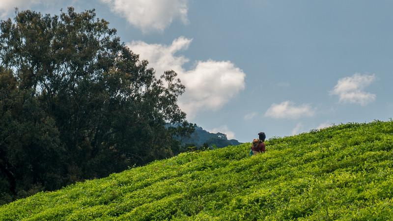 Nyugwe-Rwanda-23.jpg