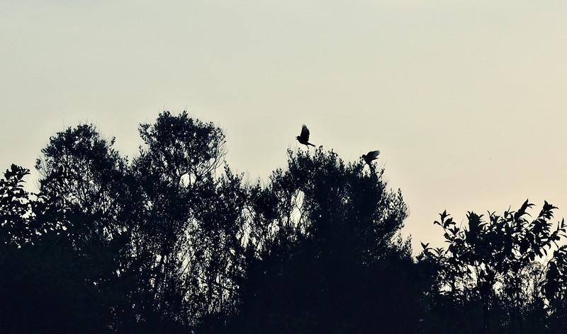 Bird Silhouettes - Lake Fork, Texas