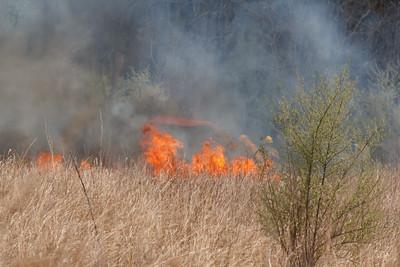 Prescribed Burn, Canoe Creek State Park