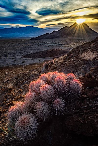 JM8_1291 Barrel Cactus Hells Gate LPN R4.jpg