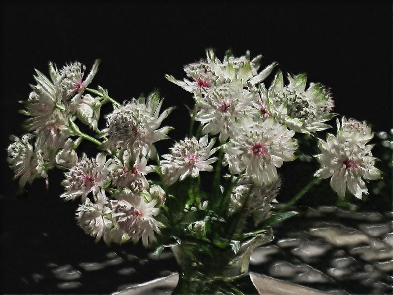 Astrantia Bouquet
