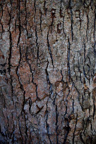 2016 tree bark closeup .jpg