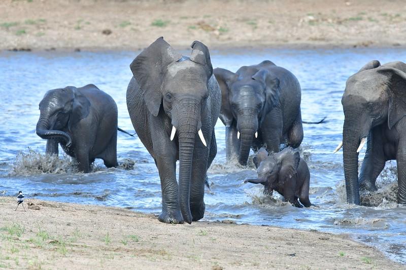 Elephants103.jpg