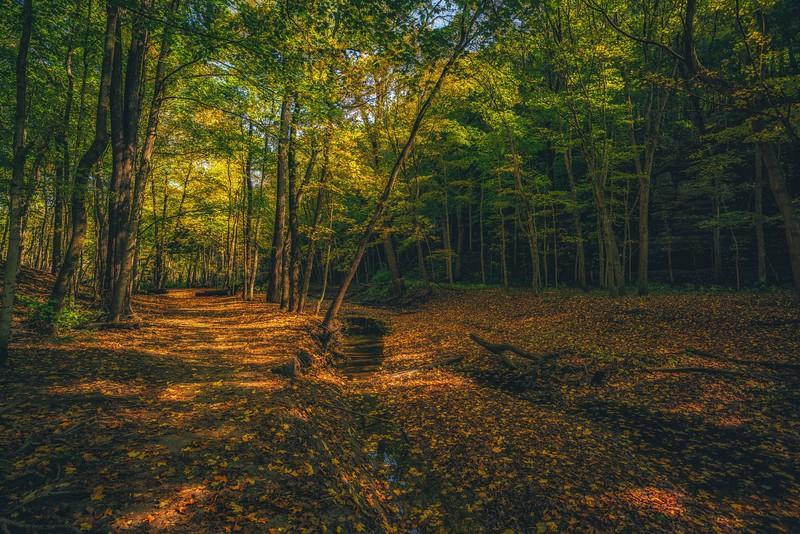 fall- (1 of 1)-2.jpg