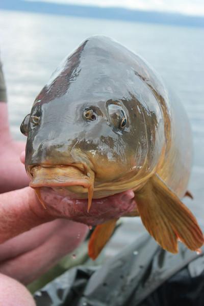 WCC12.0905.NT.Stewart Fish 5