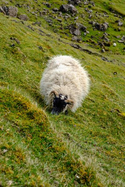 20190506 Isle of Skye 373.jpg