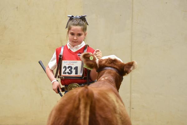 Prospect Steers