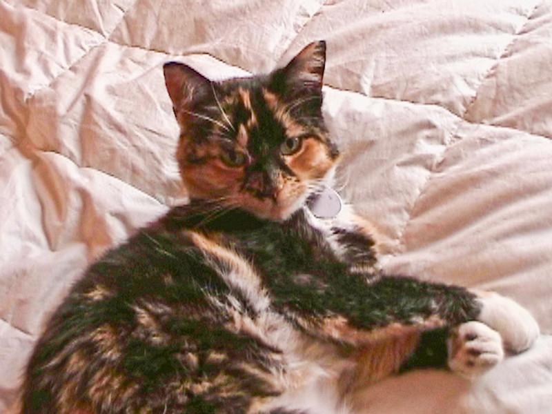 Taffie 2006-05-11-1.jpg