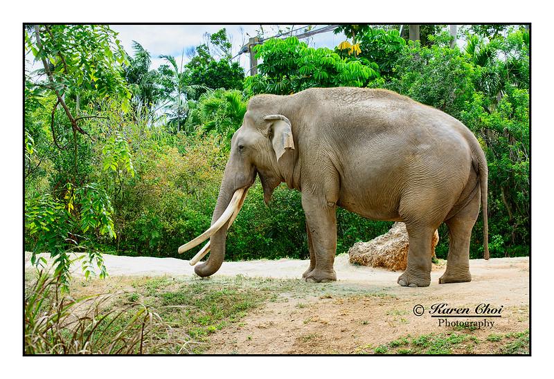 Full Body Elephant sm.jpg
