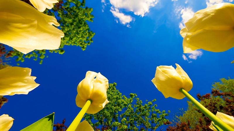 Flowers2 1920x1080 (5).jpg
