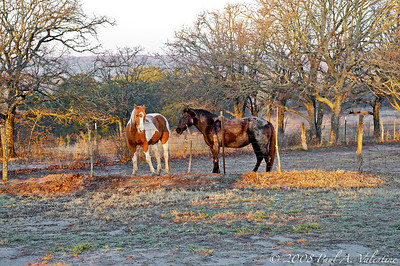 Wise County Sunrise 03-11-08